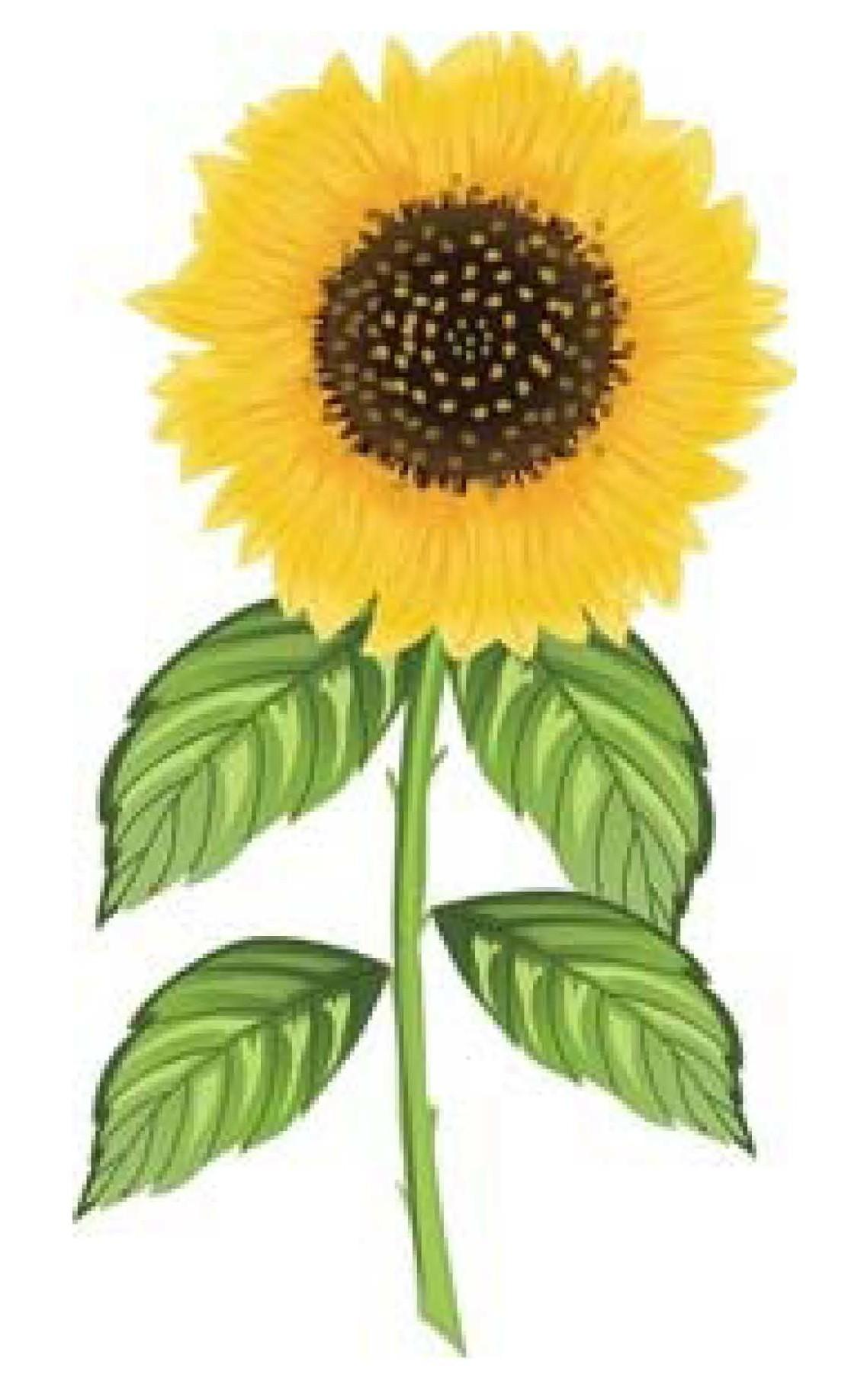 Grow Sunflowers in Hawaii