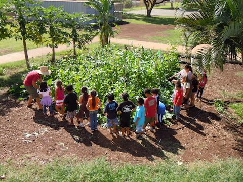 Thank You Maui School Garden Network