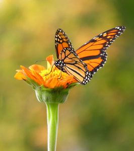 Why Care About Pollinators?
