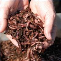 We've got worms!