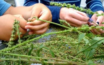 Seed Saving: The Cycle of Life… In Real Life