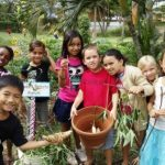 Sweet Potato Harvest at Kihei Elementary School garden, Governor Neil Abercrombie