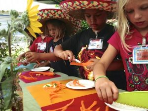 kihei elementary school students prepare stir fry ingredients with garden grown veggies