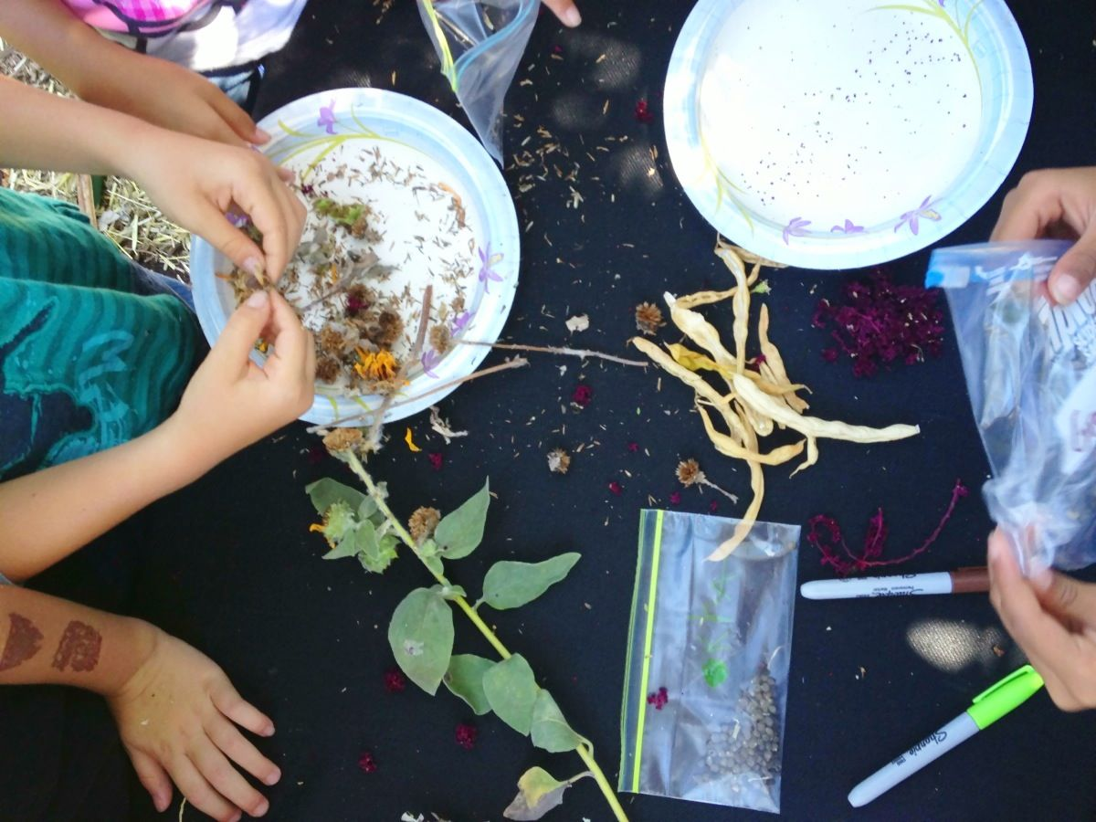 SOS: Saving Our Seeds for a Sustainable Future