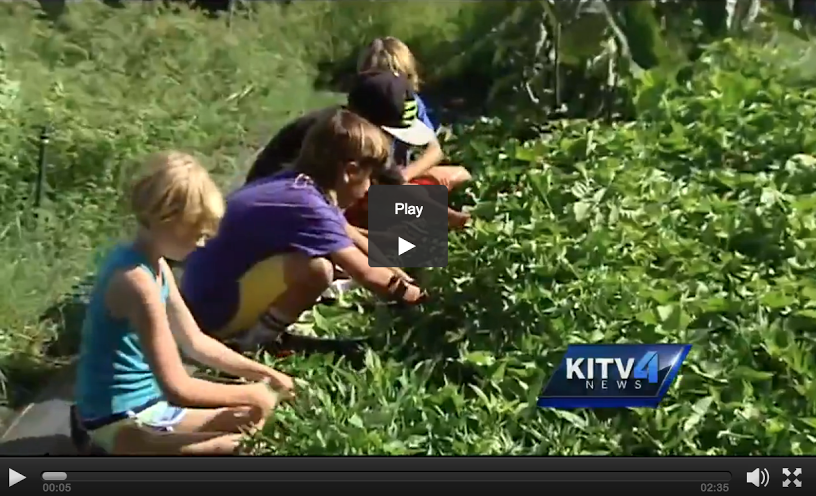 KITV screenshot