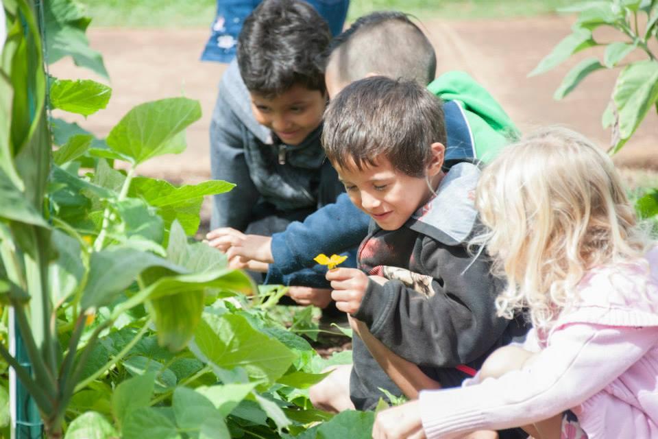 Kumu Mea Kanu: Garden Kits  (Grades 6-8)