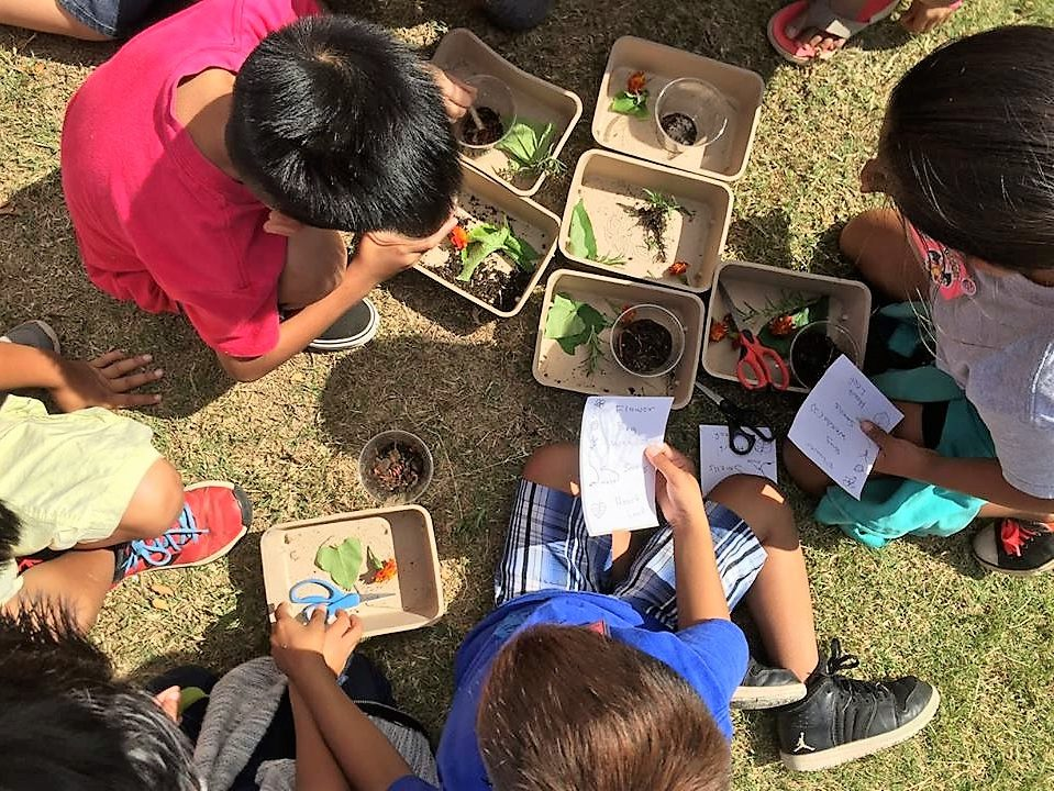 Maui Farm to School Network