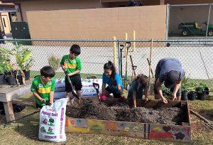 Keiki volunteers add soil amendments at Kahului Elementary School.