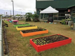 Pretty New Growing beds in place at Pu'u Kukui Elementary School.