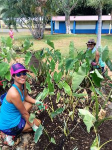 Pulling weeds in the kalo patch is part of the fun at Kihei Elementary School.