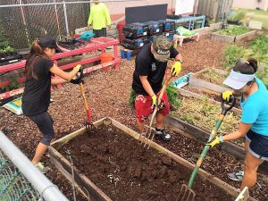 Volunteers at Kahului Elementary School prepare the soil for planting.